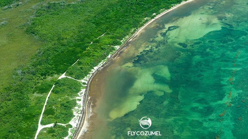 Seaweed update Cancun, Cozumel, Playa del Carmen and Tulum  • Fly